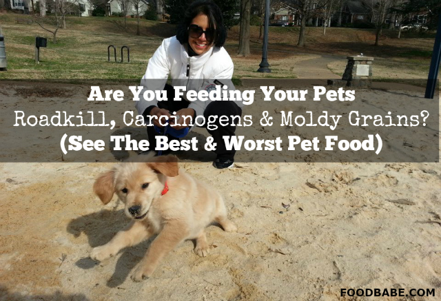 Are You Feeding Your Pets Roadkill Carcinogens Moldy Grains See